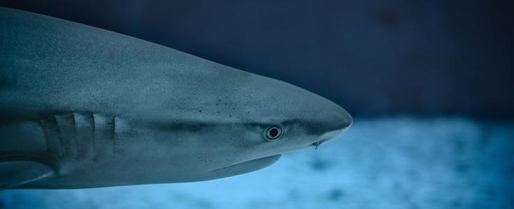 Sind sich gar nicht so unähnlich: Hai und Mensch
