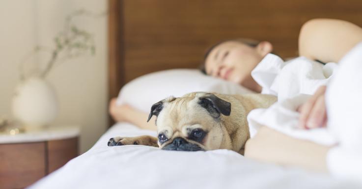 Wer krank ist, schläft zwischendurch häufiger. Ein weiterer Grund, auf Kontaktlinsen zu verzichten, bis du wieder gesund bist.